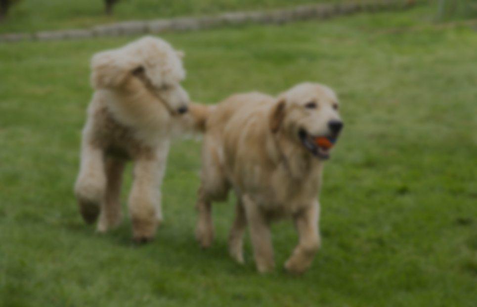 Long Island Pet Trusts Attorneys